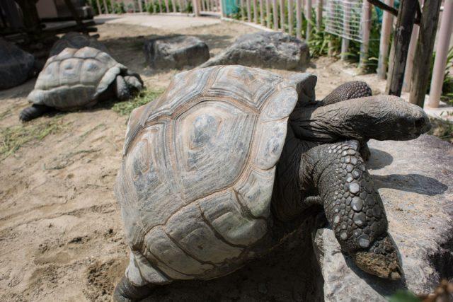 東山動植物園カメ