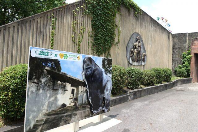 東山動植物園ゴリラ